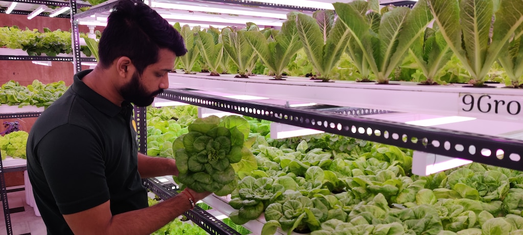 Hydroponic Farm Ventures Take Root in Indian Cities