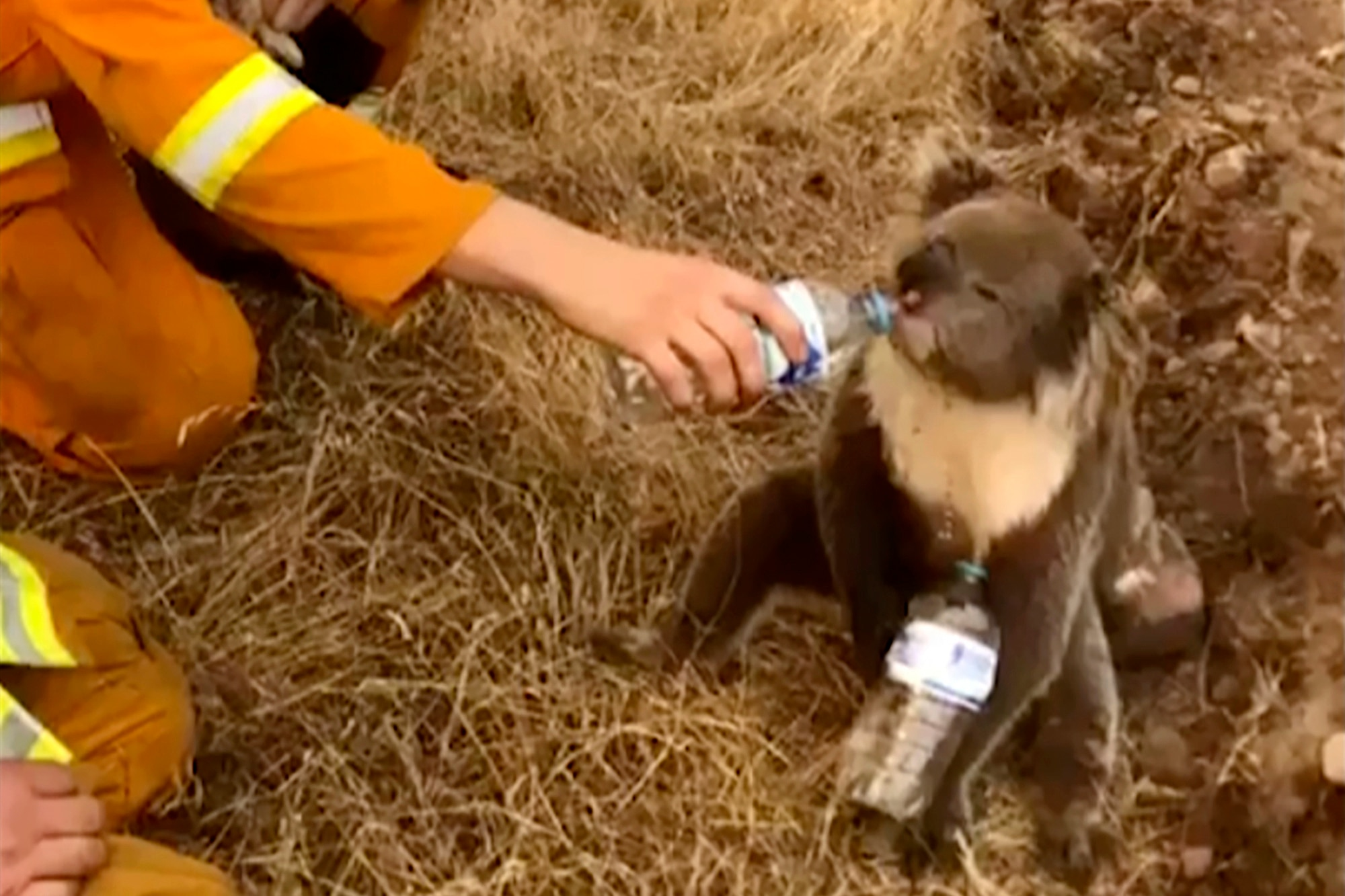 Australia Fears For Its Koalas And Fire Danger Rises Voice Of America English
