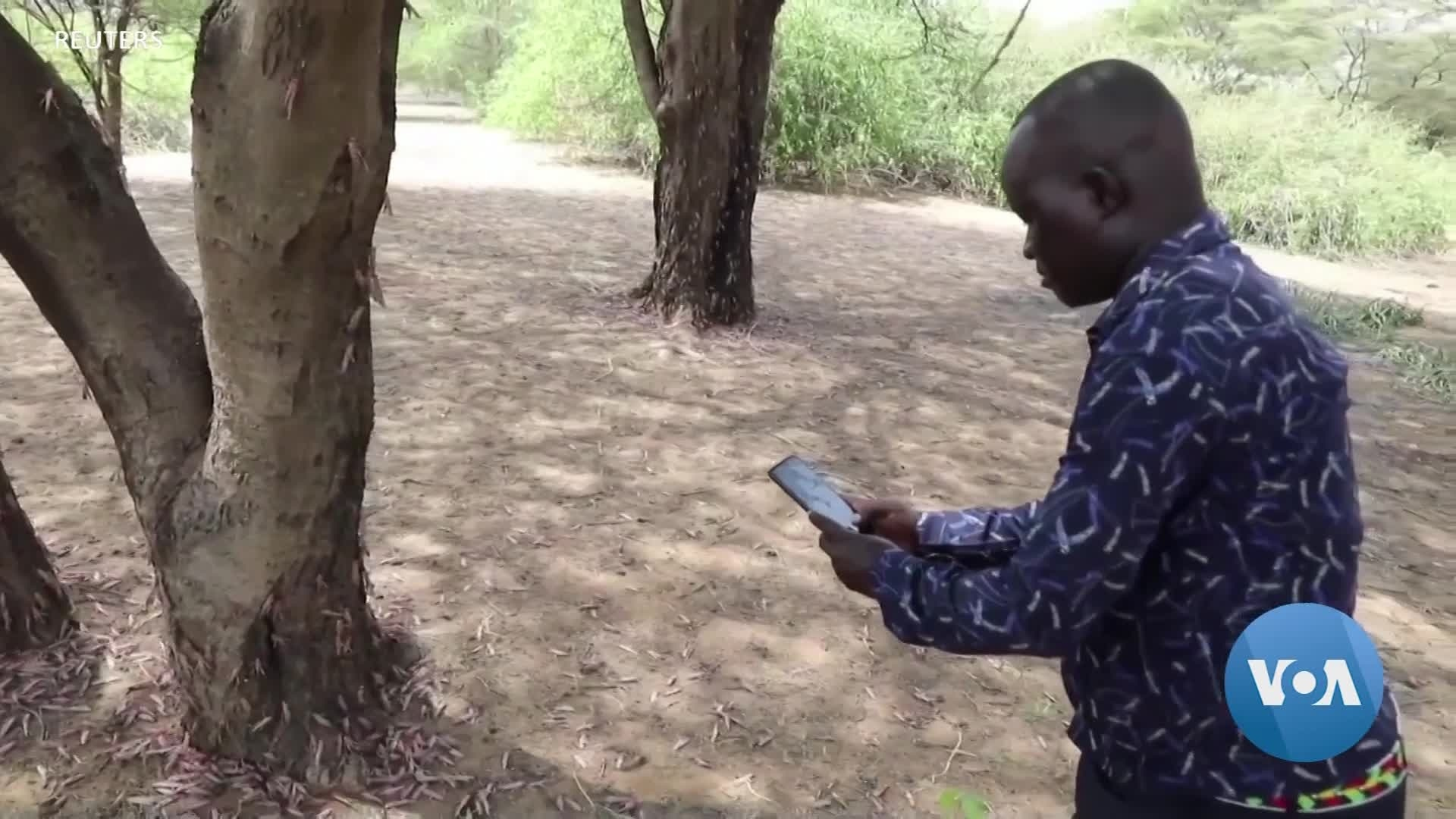 UN Introduces New App for Realtime Reporting on Locust Swarms