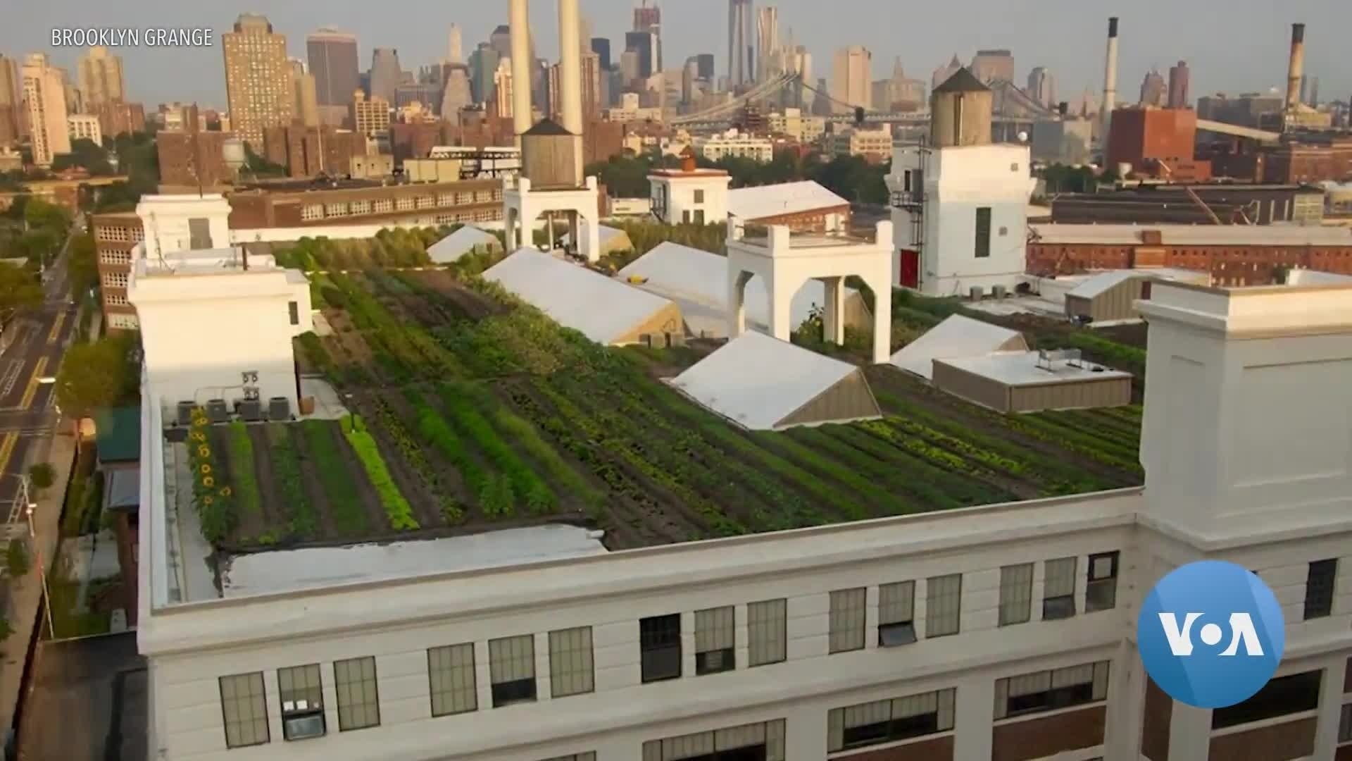 Worried About Food Supply, New Yorkers Grow Gardens