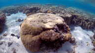 FILE - A large piece of coral can be seen in the lagoon located on Lady Elliot Island and 80 kilometers north-east from the town of Bundaberg in Queensland, Australia, June 9, 2015.