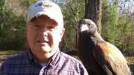 Master falconer Don Hervig of Tullahoma, Tennessee, owns two Harris's hawks. (M. Osborne/VOA)