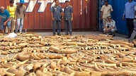 This photo taken on December 13, 2018 shows Cambodian Customs and Excise Officials looking at ivory seized from a shipping container at the Phnom Penh port.