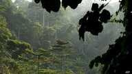 FILE - This file photo dated Sunday Aug. 24, 2008 shows the rainforest in Kakum National Park, Ghana.
