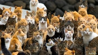 Cats crowd the harbour on Aoshima Island in the Ehime prefecture in southern Japan February 25, 2015. An army of cats rules the remote island in southern Japan, curling up in abandoned houses or strutting about in a fishing village that is overrun wi
