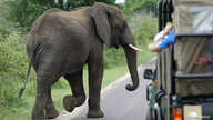 FILE - A bull elephant walks past a car load of tourists in South Africa's Kruger National Park, December 10, 2009.