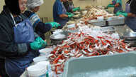 In a refrigerated workshop, employees from Laos and Thailand crack crab shells for up to 12 hours a day in Bayou La Batre, Alabama.