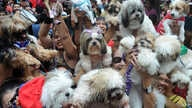 Owners raise there pets for a blessing from the Roman Catholic church to celebrate World Animal Day in Manila on October 5, 2014.