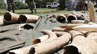 Kenyan Wildlife wardens keep a watch on confiscated elephant tusks at the Kenyan wildlife offices in Nairobi (file photo)