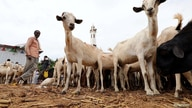 Somali people buy goats at a livestock market ahead of the Eid al-Adha festival in Mogadishu, Somalia August 10, 2019. REUTERS…