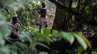 Members of the Bagyeli Pygmy community fell a tree in search of honey bees on May 26, 2017 in the Kribi region. - There are as…