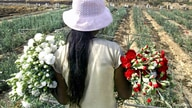 Peruvian Gisela Huamani, 11, carries flowers during a harvest at a field in a shantytown in Lima, May 26, 2005. The U.N.'s…
