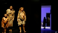 "From left, models representing Flores, Homo Sapiens and Neanderthal women stand in the ""Musee des Confluences"", a new science…"