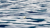 FILE - In this Saturday, July 22, 2017, file photo, a polar bear stands on the ice in the Franklin Strait in the Canadian…