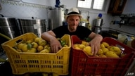 Salvatore Aceto poses in the Limoncello factory, extension of Aceto family lemon tree farm, on July 2, 2020 in Amalfi. (Photo…