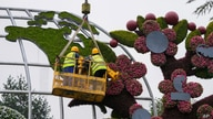 Workers on a platform set up flowers decoration with a map showing the United States in Beijing, June 13, 2021.