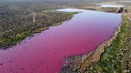 An aerial view shows a lagoon that turned pink due to a chemical used to help prawn conservation in fishing factories, near Trelew, in the Patagonian province of Chubut, Argentina, July 23, 2021.