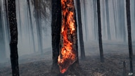 The scene of a forest fire in Pryazhinsky District of the Republic of Karelia, about 700 km (438 miles) south-west of Moscow,…