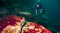 In this photo provided by the NOAA Thunder Bay National Marine Sanctuary a scuba diver observes the purple, white and green microbes covering rocks in Lake Huron's Middle Island Sinkhole in Michgan.