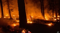 A firefighter uses a drip torch to ignite vegetation while trying to stop the Dixie Fire from spreading in Lassen National…