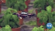 Flying Drones Attack and Destroy Moths in Midair