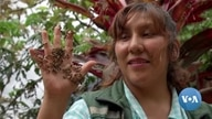 Bolivian Couple Works to Save Honeybees' Shrinking Habitats