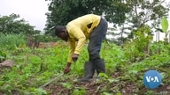 Ghana's Organic Farming Growing in Popularity During Pandemic