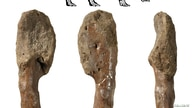 Fossilised leg bone with malignant bone cancer of the Cretaceous Period horned dinosaur Centrosaurus apertus