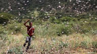 An Ethiopian boy attempts to fend off desert locusts as they fly in a farm on the outskirt of Jijiga in Somali region, Ethiopia…