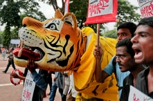 Bangladeshi protesters hold placards and a tiger effigy during a protest demanding the scrapping of the proposed Rampal power plant as they gather near the Shaheed Minar monument in Dhaka, Bangladesh, Saturday, Aug. 20, 2016.