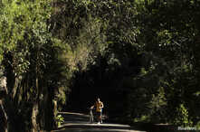 FILE - A man walks with his bicycle through the Tijuca Forest in Rio de Janeiro, July 29, 2012.