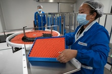 FILE - A worker feeds vials for production of SARS CoV-2 Vaccine for COVID-19.