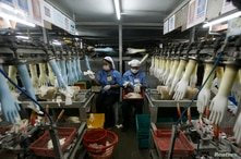 FILE - Workers collect rubber gloves at Top Glove's factory in Klang, outside Kuala Lumpur.