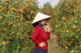 A kumquat seller uses a mobile phone while waiting for customers in Hanoi in January 2014.  E-commerce is growing in Vietnam, despite the lack of credit cards that usually facilitate electronic transactions.