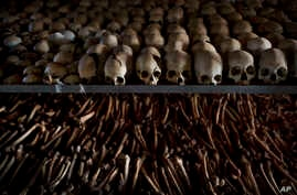 FILE - Skulls and bones of some of those killed in Rwanda's genocide are seen at a memorial shrine at a Catholic church in Ntarama, Rwanda, April 4, 2014.