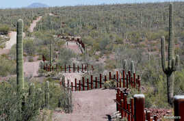 The vehicle barrier on the U.S.- Mexico border weaves around Saguaro cactus in the Sonoran desert on the Tohono O'odham reservation in Chukut Kuk, Arizona, April 6, 2017.