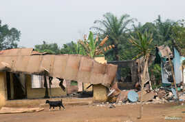 FILE - A goat walks past burned and damaged buildings in Kembong, south-west region of Cameroon, Dec. 29, 2017.