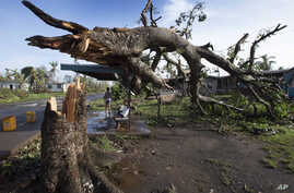 Two boys are under a bus shelter that is supporting a fallen tree in the village of Talecake, Fiji, Wednesday, Feb. 24, 2016.