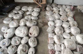 A man (top) in handcuffs crouches next to slaughtered pangolins after they were seized by the authorities, at an underground garage in Guangzhou, Guangdong province, China, Sept. 11, 2014.