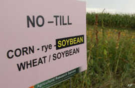 Nearly half of the farmland in the United States is planted with crops that have been genetically engineered, mainly maize, soybeans and cotton.