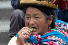 A woman chews coca leaves during an event commemorating the tradition of coca leaf chewing in La Paz, Bolivia, Jan. 11, 2017. Coca has been cultivated in the Bolivian Andes since at least the Inca era.