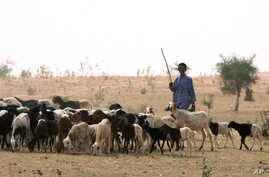 FILE - Nomadic Fulani herder grazes his sheep on parched land around Gadabeji, Niger, May 11, 2010. Technological advances now allow the region's semi-nomadic people to produce and share locally-specific, real-time weather forecasts.