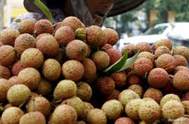 A vendor transports lychees for sale on the street in Hanoi June 14, 2007. REUTERS/Kham (VIETNAM) - RTR1QRZG
