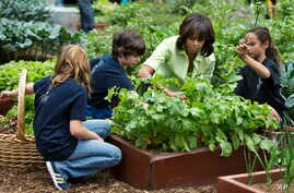 In this May 28, 2013 file photo, first lady Michelle Obama joins New Jersey school children  to harvest the summer crop from the White House kitchen garden at the White House in Washington. Obama has pushed for reducing childhood obesity.