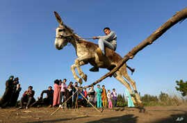Egyptian farmer Ahmed Ayman, 14, rides his trained donkey as he jumps over a barrier in the Nile Delta village of Al-Arid about 150 kilometers north of Cairo, Egypt, Feb. 5, 2016.