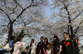 Visitors take their souvenir photos with cherry blossoms in Seoul, South Korea, April 7, 2017.