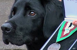 Treo, top dog, was awarded a top military prize for his valor
