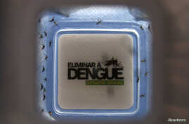 FILE - Mosquitoes with the dengue-blocking Wolbachia bacteria were released in the Tubiacanga neighborhood in Rio de Janeiro, Sept. 24, 2014. Similar actions took place in Australia, Vietnam and Indonesia to fight dengue fever.