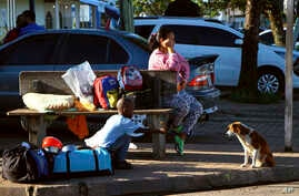A Venezuelan boy offers food to a dog in Pacaraima, the main entry point for Venezuelans, in the Brazilian northern state of Roraima, Brazil, Aug. 21, 2018.