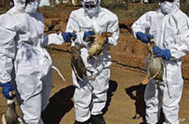 WHO Recommends Continued Research of Lethal Bird Flu Strain